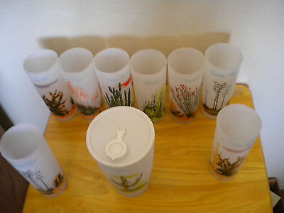 ARIZONA BLAKELY OIL & GAS Frosted CACTUS Glasses
