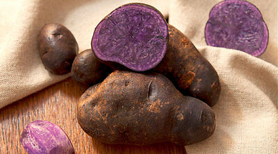 Purple Potato Seed 200PCS Sweet DIY Home Garden Nutrition The Best Gift