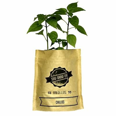 NEW Chillies herb in a bag by Sow Grow Eat