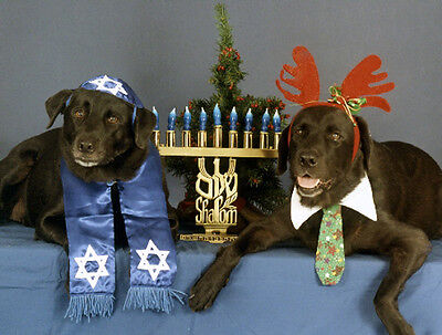 Pet Interfaith Christmas & Hanukkah Cards:Dog Labrador
