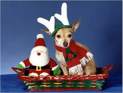 Pet Christmas Cards:Dog Chihuahua Reindeer