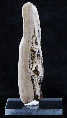 Fossilized Petrified Polished Wood Branch From Utah 66-150 Million Yrs Ago Sdo1