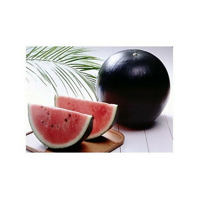 Black Sweet Watermelon 100  Seeds