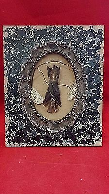 *SALE-Taxidermy Bat in Fancy Frame-Tabletop Frame///voodoo-witch-pagan-magic