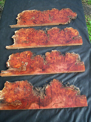 4 x Large TASMANIAN MYRTLE BURL Craft Slices