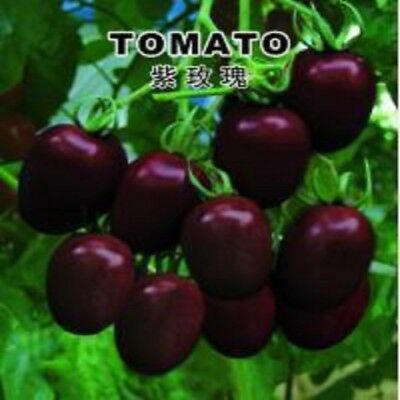 200PCS of Purple Pink Rose Small Tomato Seeds Seed Organic Vegetable Garden
