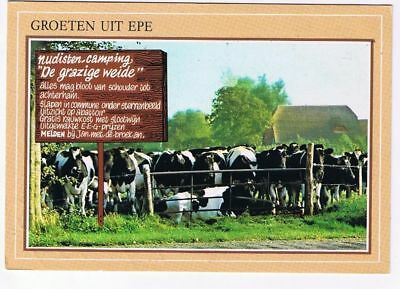 Holland Netherlands Postcard Epe Gelderland Cows
