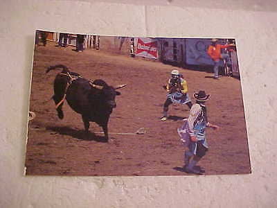 Calgary Stampede  Bull And Clown  Postcard