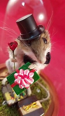 """Taxidermy/Anthropomorphic Mouse """"In the Doghouse"""" Display-Anniversary-birthday"""