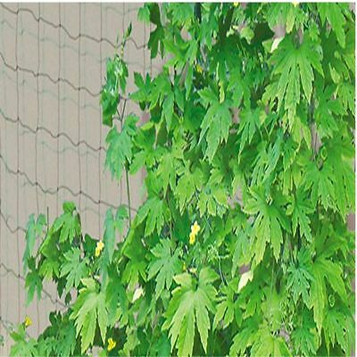 Mesh Bean Garden Use Green Nylon Fence Plant Support Climbing Netting 1.8X3.6m