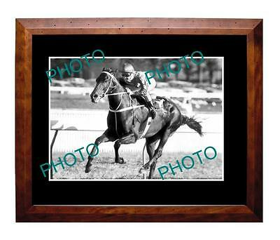 Kingston Town 1980 Sydney Cup Win Large A3 Photo