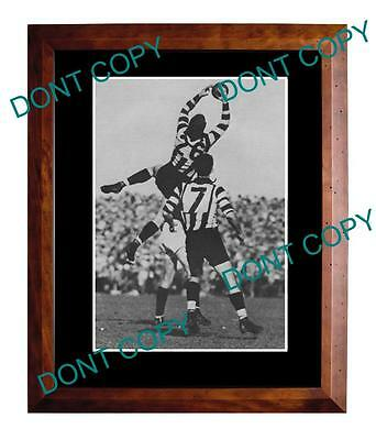 HARRY SULLIVAN COLLINGWOOD GREAT 1950's A3 SPECKY PRINT