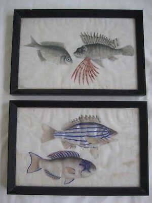 Antique Chinese Fish Rice Paper Watercolour Paintings