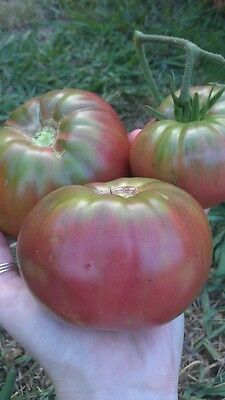 Sweet Organic Black Russian Tomato Seeds x10 Vegetable Garden Rare Heirloom