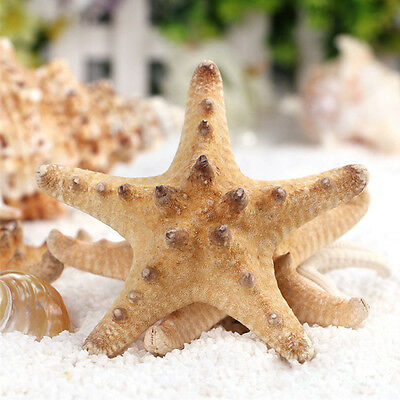 2x Natural Starfish Sea Star Wedding Craft Ornament Decoration Photography Props