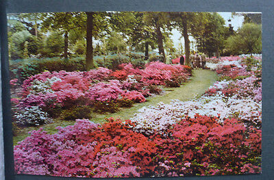 Vintage British Postcard - Annual Border In August
