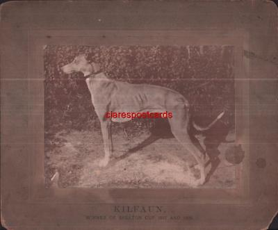 Victorian Greyhound Racing 1897 photo champion dog Skelton Cup unusual rare