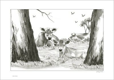Jersey Cows     Australian    Pencil  Drawing   Limited Edition Print