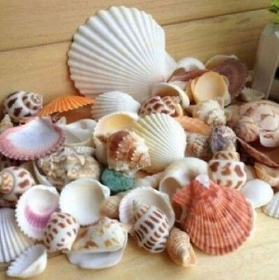 100g Beach Mixed SeaShells Mix Sea Shells Craft SeaShells Aquarium Decor S5