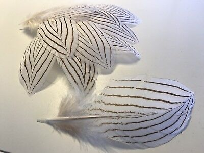 Bulk 12 x 11-15cm Delicate Silver Pheasant Feathers DIY Craft Millinery Jewelery