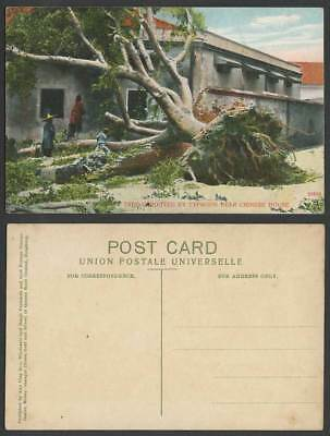 China Hong Kong Old Postcard TREE Uprooted By TYPHOON near a Chinese House Women
