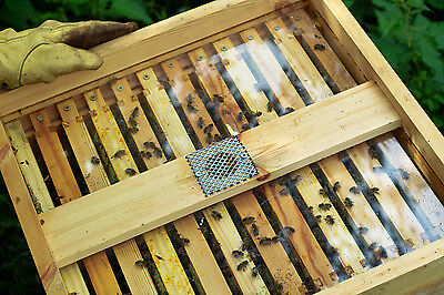 1 National Bee Hive, See Through Crown Board