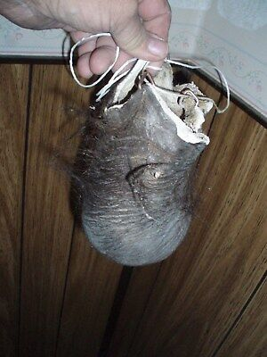 bison scrotum real buffalo Ball bag oddity nutsack gag gift mountain man bag A7