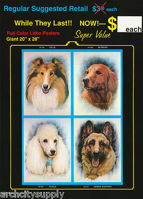 2 POSTERS: DRAWING: DOGS SELL SHEET COLLAGE by MARCIA L. HINDS  #14-74X  LP44 Z