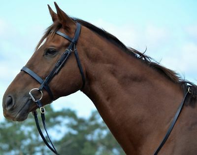 RUMANI ELEGANT Horse Snaffle Leather BRIDLE & CONTINENTAL REINS Black ALL SIZES