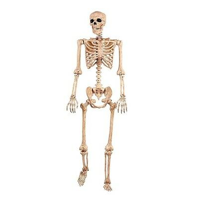 New LIMITED EDITION Life Size Human Anatomy Decor Skeleton Body FAST Shipping