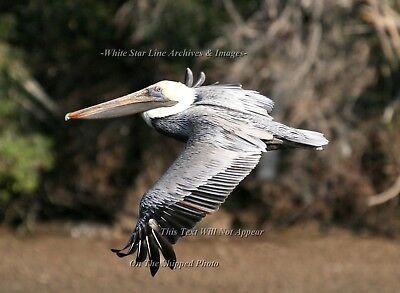 Photo: INCREDIBLE PELICAN SERIES: Jungle Pelican: Louisiana Bayou, 2006