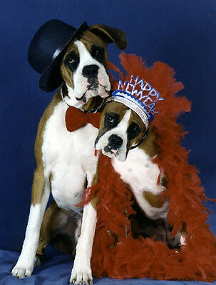 Pet Christmas Cards:Dog Boxer New Year