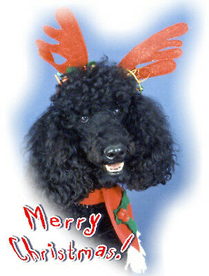 Pet Christmas Cards:Dog Poodle Black Standard