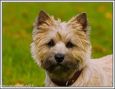 4Pack Puppy Dog Cairn Terrier Dogs Stationery Greeting Notecards / Envelopes 3