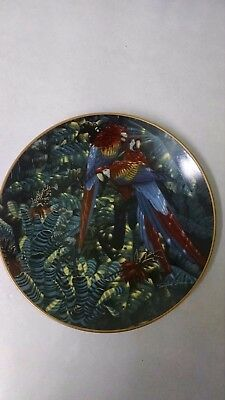 Scarlet Macaws Plate