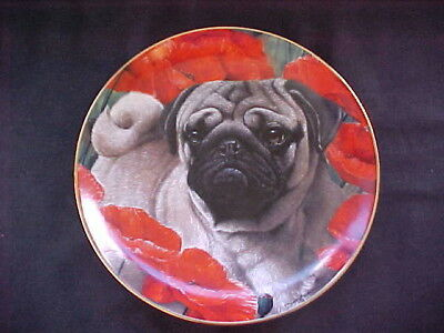 "Danbury Mint ""Poppy Love"" Pug Plate ""So Cute"""