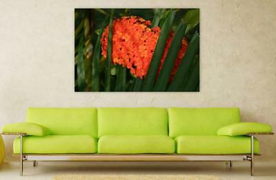 Canvas Poster Wall Art Print Decor Orange Flower Hydrangea Green Leaves