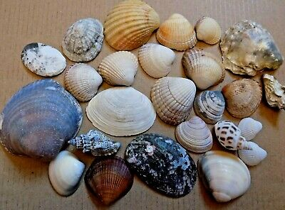 Mixed Assorted Sea Shells Welsh Beach Seashells Aquarium Decoration Craft 100g