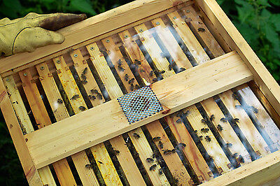 1 Smith Hive See Through Crown Board