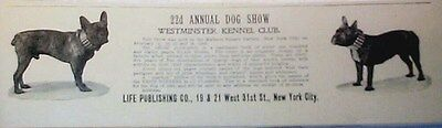 ADVERTISEMENT REPRINT FOR THE 22nd WESTMINSTER DOG SHOW IN LIFE MAGAZINE 1898