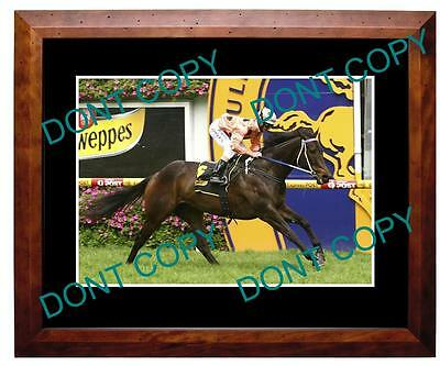 Black Caviar, Horse Racing Champion A3 Large Photo 3