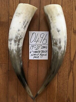 "19""-21"" Each. Cow Horns/ Bull Horns STEER LONGHORN TAXIDERMY Pairs Polished"