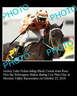 Black Caviar Horse Racing Champion Large Photo 1