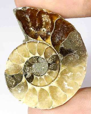 51.85Cts. HUGE! NATURAL FOSSIL AMMONITE FANCY CABOCHON LOOSE GEMSTONE