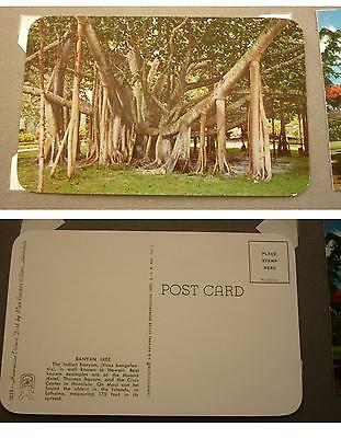 OLD 1960s POSTCARD, HONOLULU HAWAII PACIFIC ISLANDS, THE BANYAN TREE