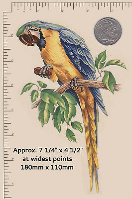 "1 x Waterslide ceramic decal Decoupage Tropical bird Approx. 7 1/4"" x 4 1/2"" P34"