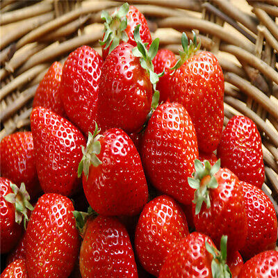 Giant Red Strawberry Seeds Garden Fruit Plant Sweet & Delicious Veg Fruits Home