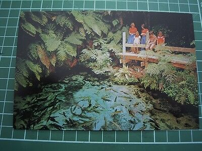 1980's  POSTCARD - FAIRY SPRINGS ROTORUA NEW ZEALAND - ColorView CB55 NEW
