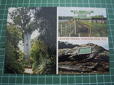 1980's  POSTCARD - KAURI TREES - NORTHLAND -  NEW ZEALAND - ColorView NL9136 NEW