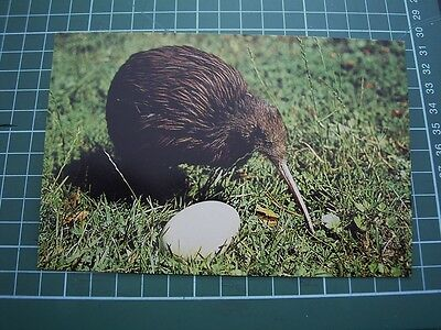 1980's POSTCARD - KIWI & EGG - NEW ZEALAND - NEW